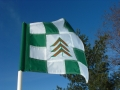 flag-checkered-evergreen