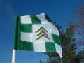 flag-checkered-evergreen